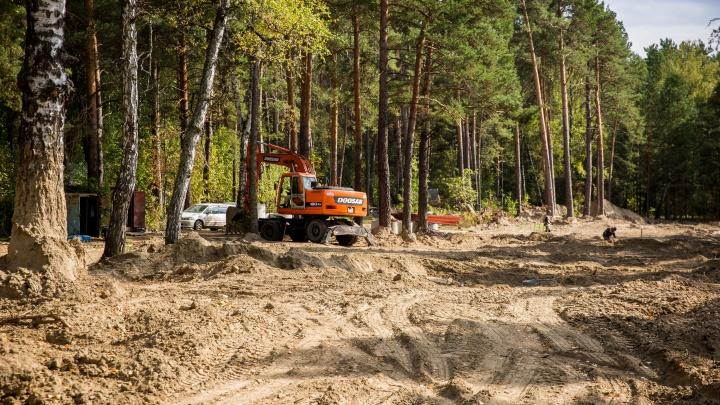 В Новосибирске появилась карта, по которой можно отследить вырубку деревьев