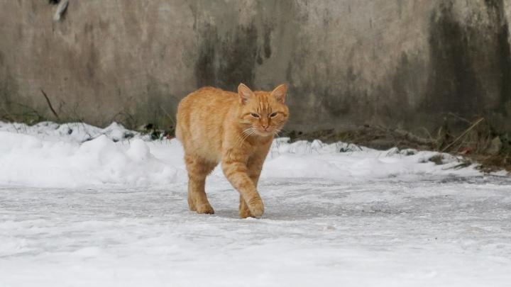 Жительницу Добрянки оштрафовали за любовь к котикам