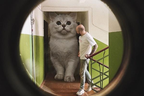 Коты есть на всех публикациях в инстаграме Андрея