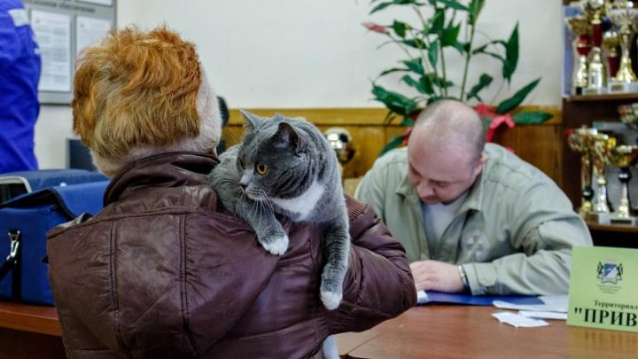 Мастерская по ремонту котов: в центре открылся государственный ветеринарный участок с низкими ценами