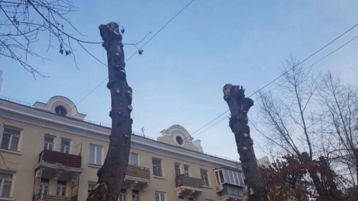 «Это уродство!»: челябинцев возмутила жёсткая обрезка деревьев на ЧТЗ
