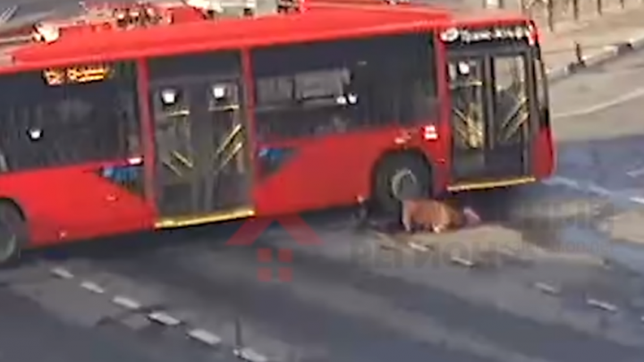 Даже не остановился: в центре Ярославля троллейбус сбил женщину. Видео