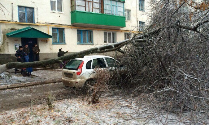 В Башкирии на легковушку упало дерево