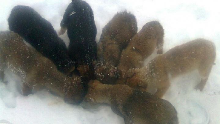 «Мало хвостиков обрело дом»: в Волгограде спасли сотню собак и кошек