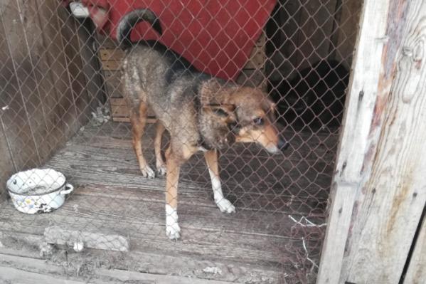 К организации, которая будет отлавливать беспризорных собак в Кургане, будут предъявляться более жёсткие требования