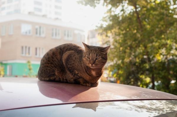 Коммунальщики ждут, когда в Челябинске установится тёплая погода
