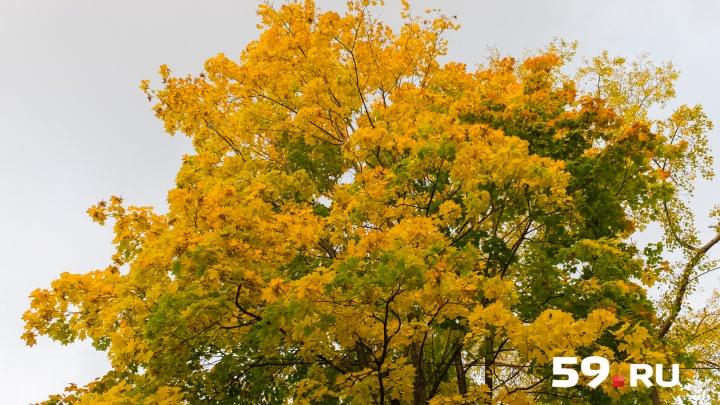 Сухо и солнечно. В ГИС-центре ПГНИУ рассказали о погоде в Прикамье на сентябрь