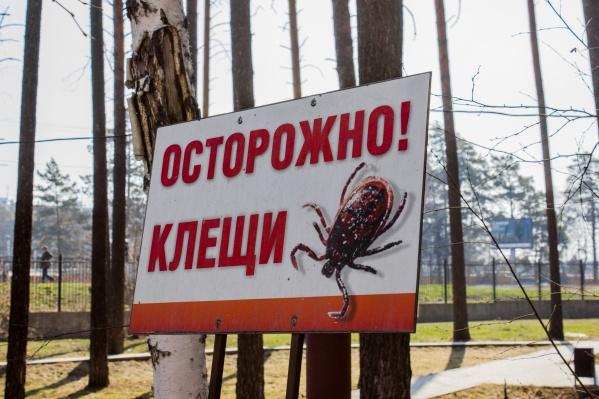 В Новосибирске уже начался сезон активности клещей