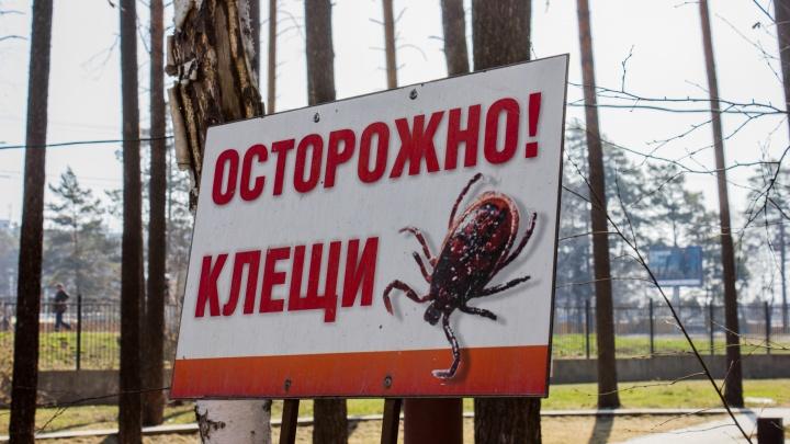 Места знать надо: где в Новосибирске поставить инъекции после укусов клещей