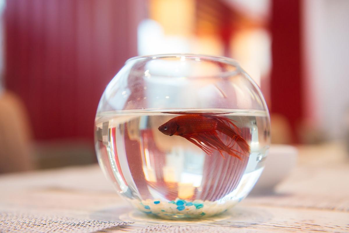 На каждом столике живут рыбки