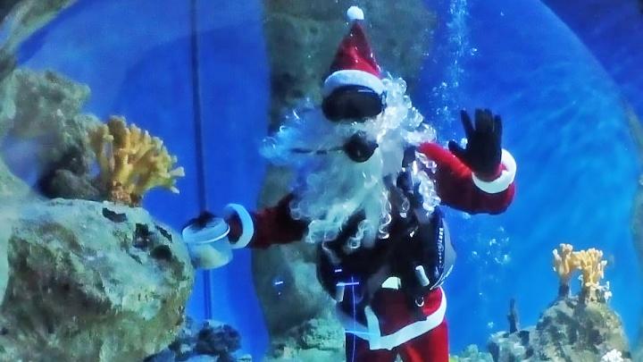 Кусь за бороду: Дед Мороз нырнул к рыбам в дельфинарии — акула захотела съесть его колпак