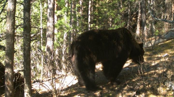 Об опасной активности диких животных на «Столбах» и на о. Татышев предупреждают спасатели