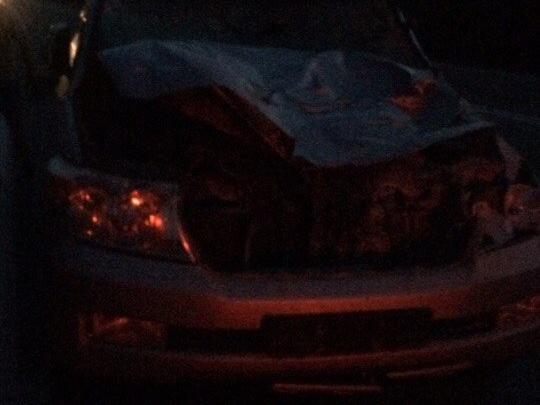 Лось на трассе у Зеледеевского кольца стал причиной сразу двух аварий с пострадавшими