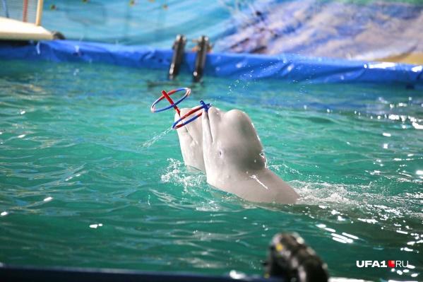 В Уфе хотят построить дельфинарий
