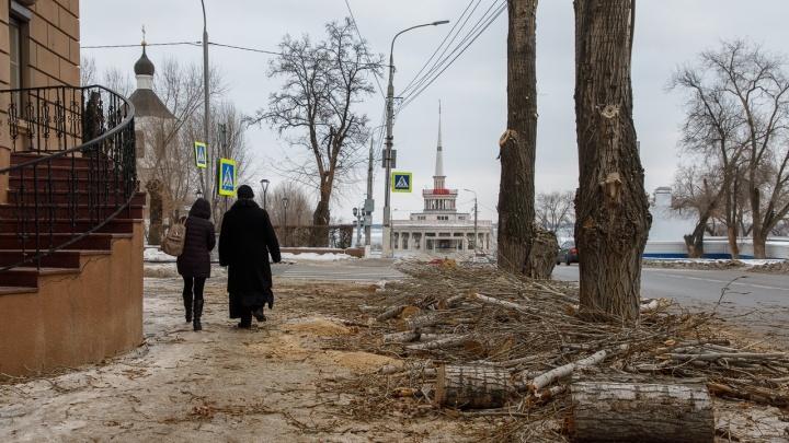 «Пилой по сердцу»: в центре Волгограда обрубили очередную аллею тополей