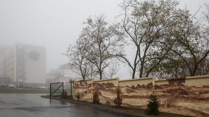 Две жертвы опасных грибов попали в больницу Волгограда