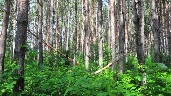 """""""Если встретили кабана - сразу на дерево"""": МЧС выпустило памятку для уральцев, которые заблудились в лесу"""