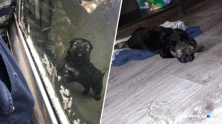 Спасенный из машины щенок обрел новых хозяев