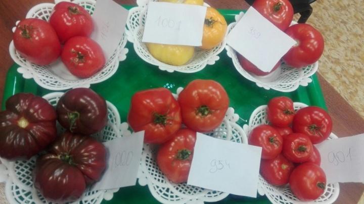 Екатеринбургские учёные вырастили чёрные помидоры, которые защитят от рака