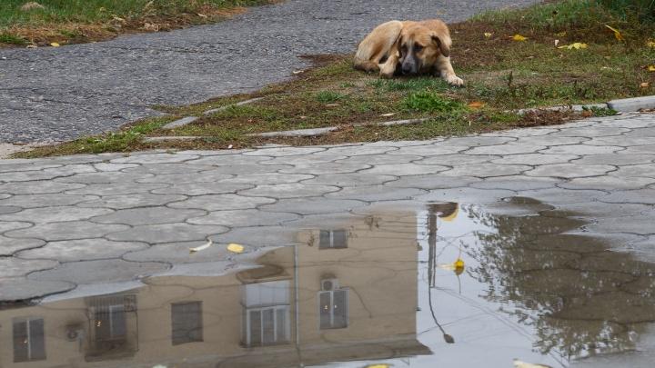 Зарядит на все выходные: Волгоградской области пообещали возвращение ливней и шквалистого ветра