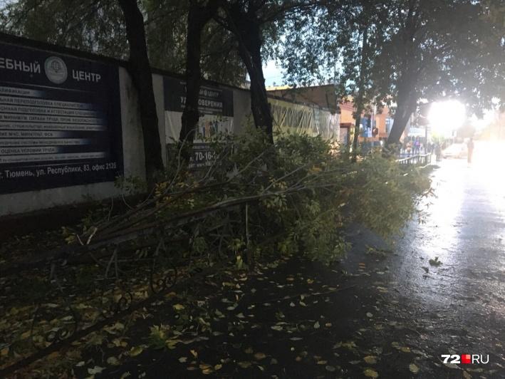 Тонкое деревце упало на ул. Максима Горького неподалеку от пожарной части