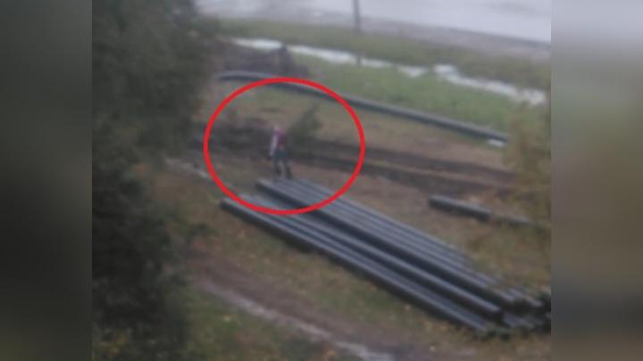 В Ярославле на видео попался похититель ёлок