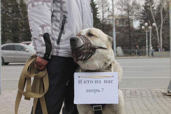 На митинг пришли не только люди, но и собаки