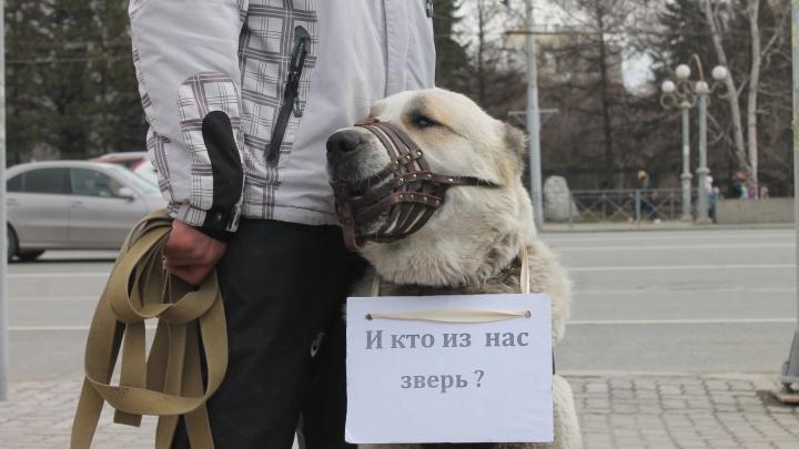«Люди должны быть наказаны»: сотни новосибирцев вышли на митинг против убийства бездомных зверей