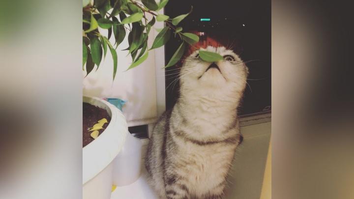 За детьми присматривают коты: самые необычные кадры с пушистыми питомцами ростовчан