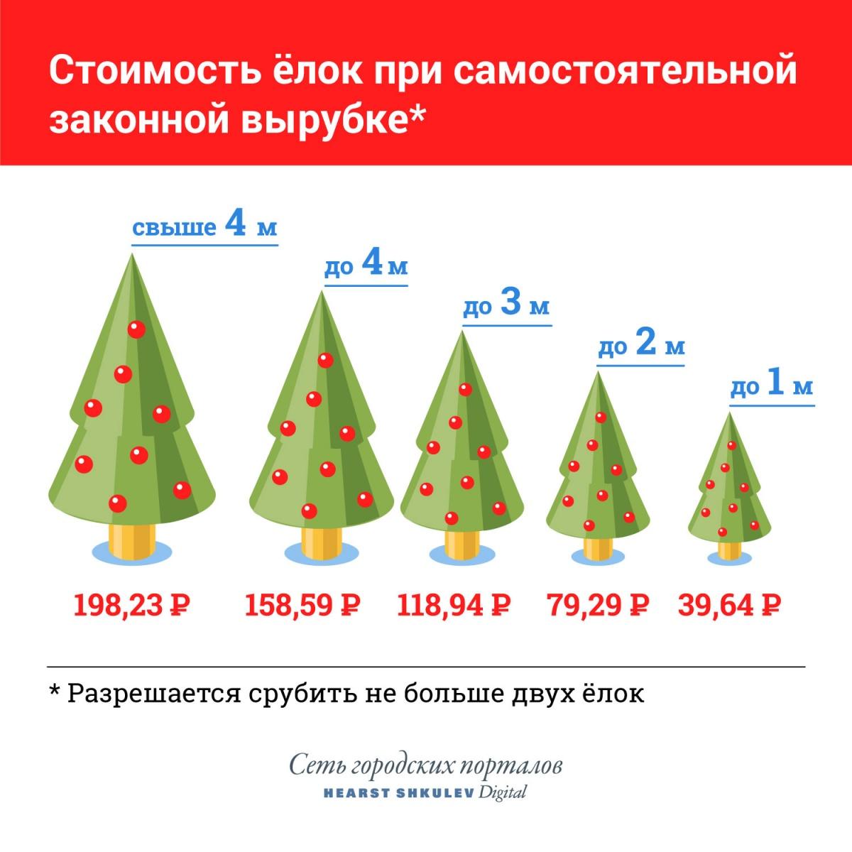 Инструкция E1.RU для тех, кого послали в лес:где на Урале законно срубить ёлку и сколько это стоит