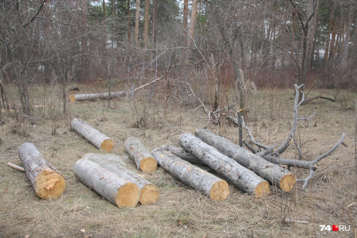 Сотрудники лесничества взяли деньги за выделение леса на рубку и продажу