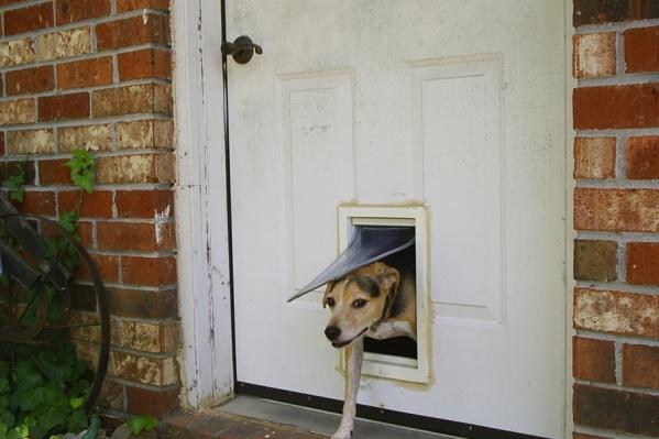 В Курганской области вор похитил продукты и водку, забравшись в дом через выход для собак