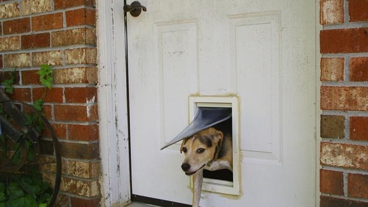 В Далматовском районе грабитель проник в дом через ход для собак