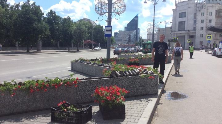 Теперь они вам понравятся: в клумбы, перегородившие тротуар перед «Гринвичем», высадили цветы