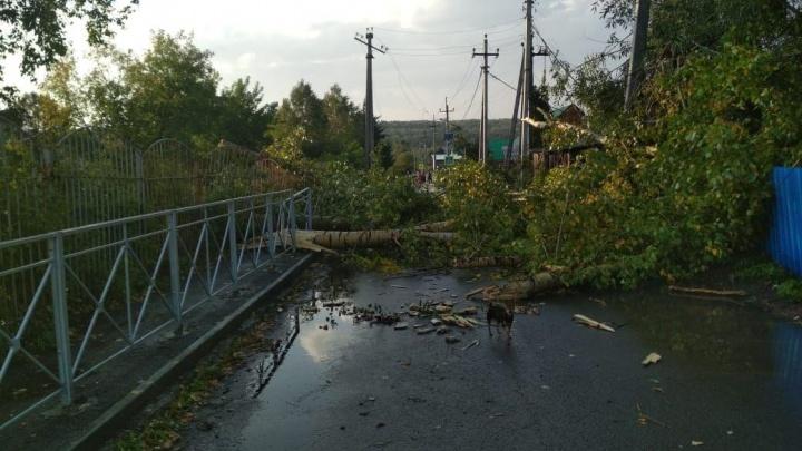 В деревне под Новосибирском ураган снёс крыши с нескольких домов и повалил деревья