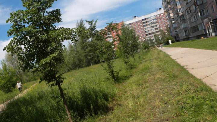 Сквер вместо высотки: на знаменитом пустыре Академгородка разобьют парк