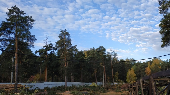 «Лес остаётся только на картах»: в челябинском парке вырубили деревья под центр шорт-трека