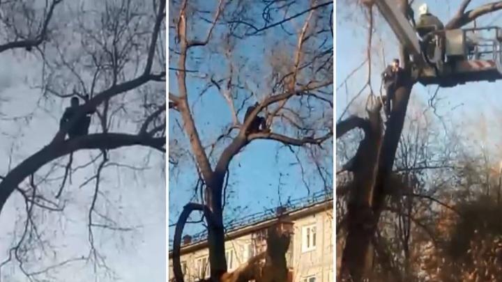 Спасателям пришлось снимать с дерева омича, который полез за кошкой