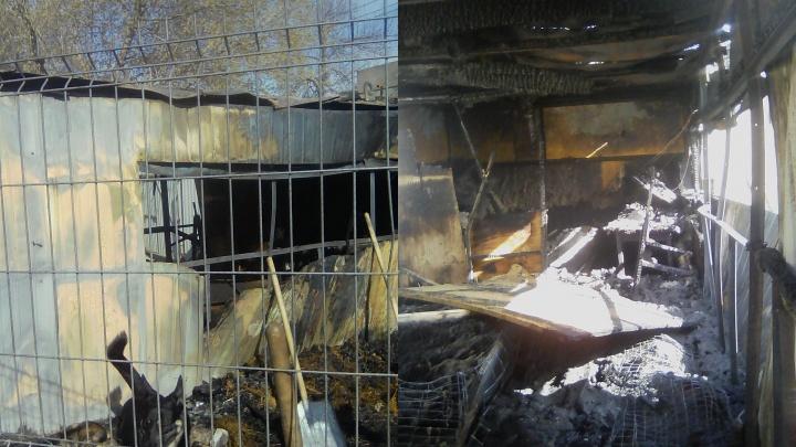 Погибли щенки: в Тольятти сгорел приют для животных
