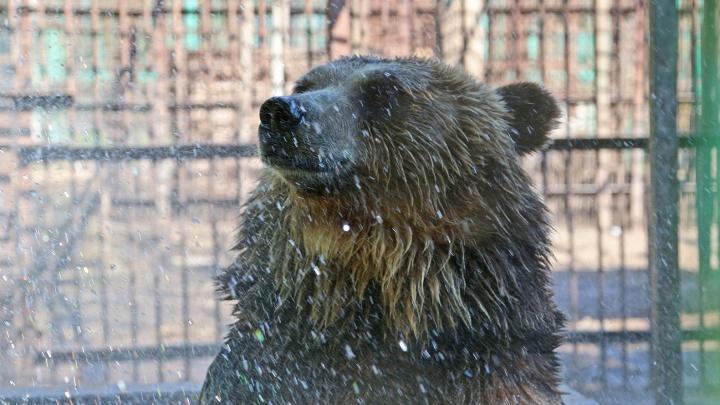 Косолапые готовятся к зиме: в нацпарке «Башкирия» рассказали об опасности столкновения с медведями
