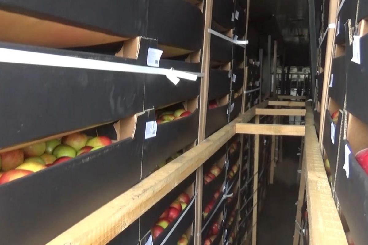 На Троицком таможенном посту задержали 214 тонн яблок стоимостью 16 миллионов рублей
