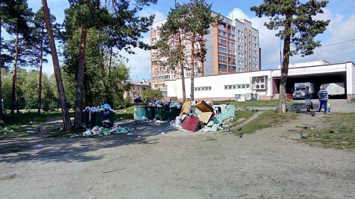 Из Ярославля вывезли более 600 тонн отходов: откуда берутся новые мусорные завалы. Видео