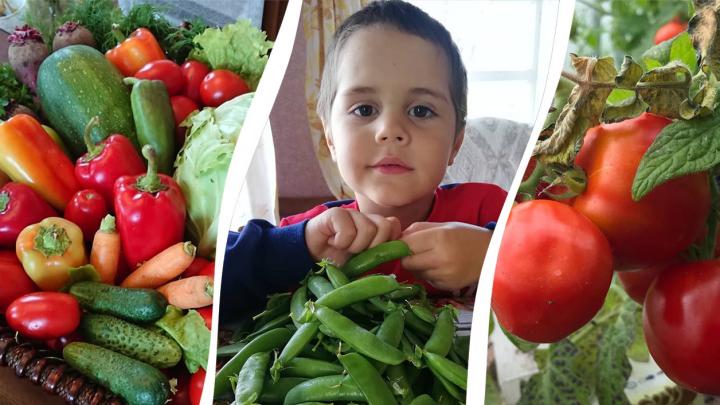 «Теплички радуют»: что выросло на огородах Архангельской области холодным и дождливым летом