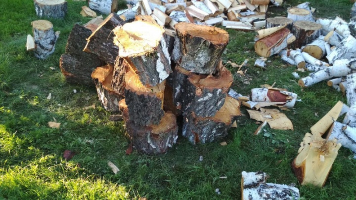 Зауралец незаконно напилил дров на 260 тысяч рублей