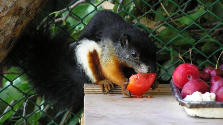Из-за булок и чипсов — расстройство желудка: пермяков просят не кормить животных в зоопарке