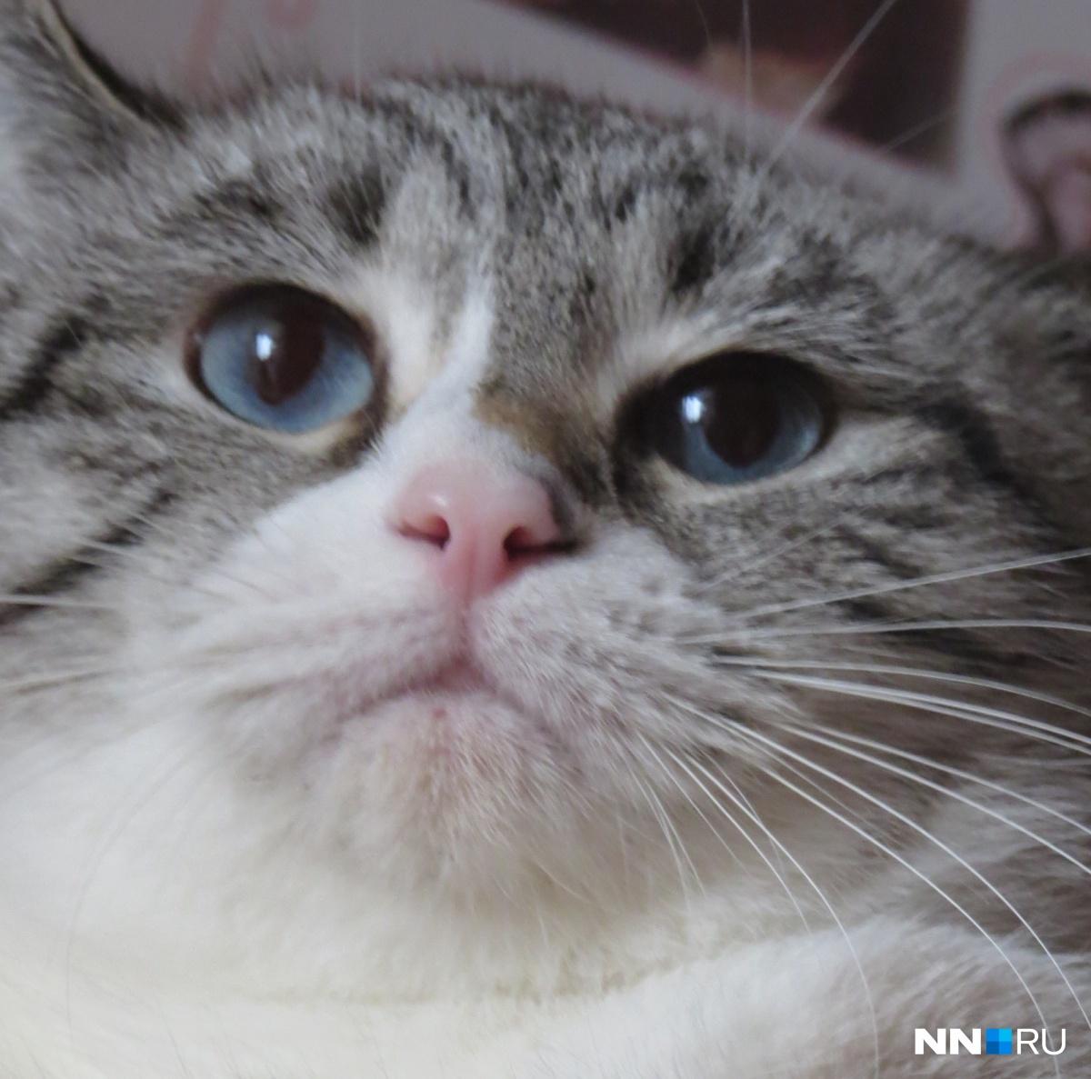 ВНижнем Новгороде открылась вакансия для котов с заработной платой 20 000 руб.