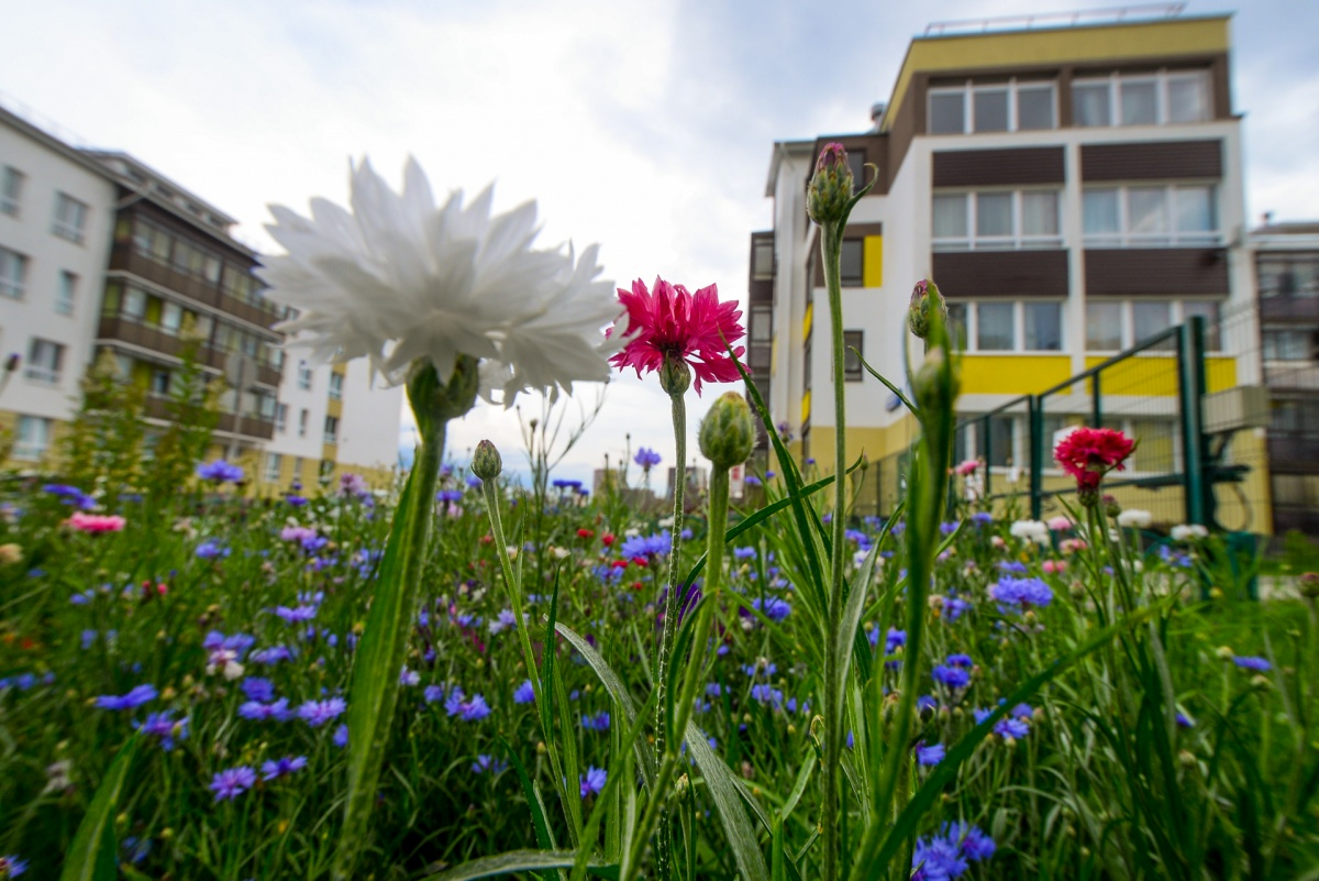 В «Мичуринском» жители сами высаживают цветы во дворах