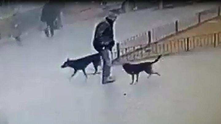 «Ждём, когда случится трагедия»: стая бродячих собак покусала десятки волгоградцев