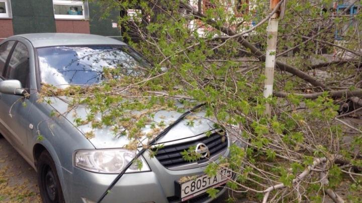 «Чуть по голове не получил»: на парковке у челябинского ресторана ветер повалил дерево