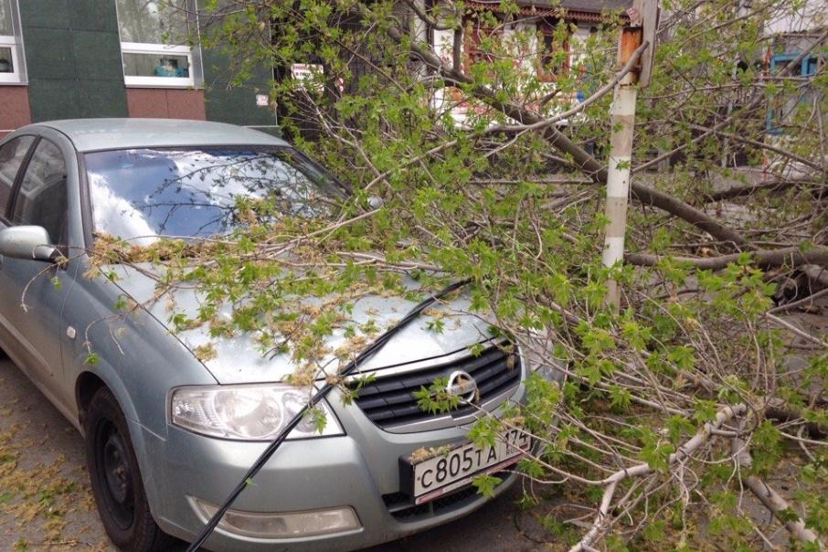 Дерево упало на парковке возле ресторана «Журавлина»